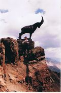 In den Bergen fühlte Herbert sich Zuhause.
